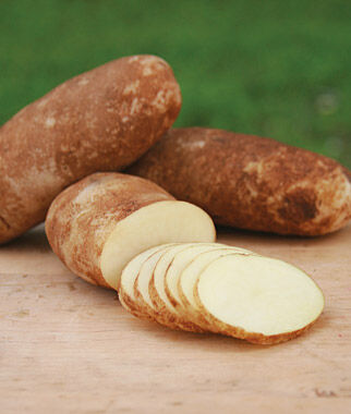 Potato, Cal White , , large