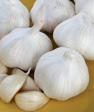 Garlic, Nootka Rose 1/2 lb. Garlic, Garlic Sets, Garlic Plants, Garlic bulbs, Garden Supplies, Vegetable Garden