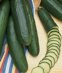 Cucumber, Early Pride Hybrid, , large
