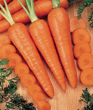 Carrot, Kuroda 1 Pkt. (1000 Seeds), Carrot, Carrot Seeds, Carrot Seed, Seeds, Vegetable Seeds, Vegetable Garden Supplies, Garden Seeds