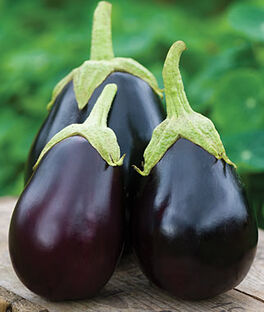 Eggplant, Early Midnight Hybrid, , large