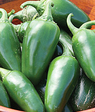 Pepper, Hot, Jalapeno Early , , large