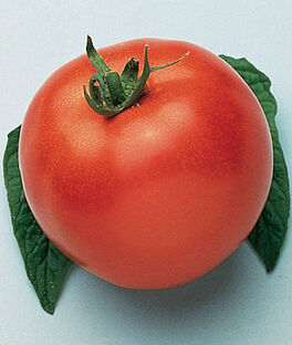Tomato, Marglobe, , large