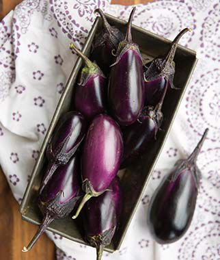 Eggplant, Patio Baby Hybrid, , large
