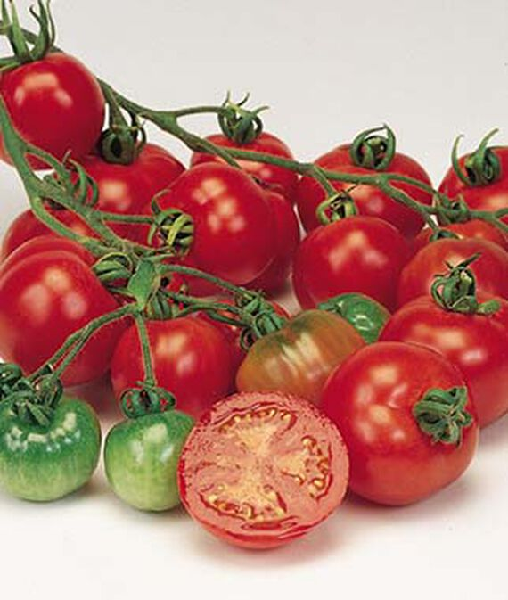 Tomato, Bloody Butcher 1 Pkt. (40 seeds) Tomato Seeds, Early Tomatoes, Early Tomato Seeds, Tomato Plants, Short Season Tomatoes, Garden Seeds