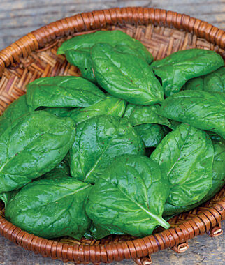 Spinach Seeds - Baby Leaf And Salad Fresh Spinach, Vegetable Seeds