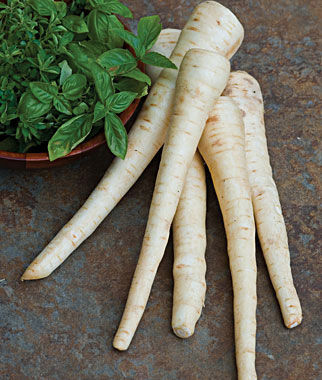 Parsnip, Hollow Crown, , large