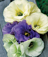 Lisianthus, Rose Bouquet Collection, , large