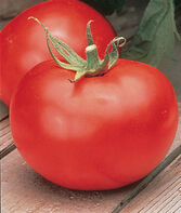 Tomato, Better Boy  Hybrid   , , large
