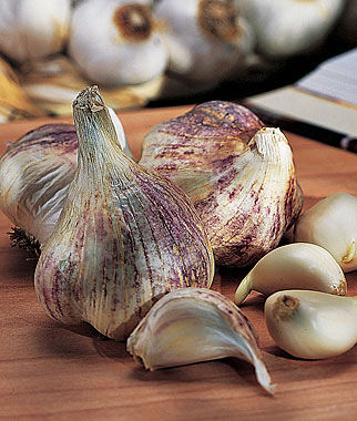 early italian garlic seeds and plants vegetable gardening at. Black Bedroom Furniture Sets. Home Design Ideas