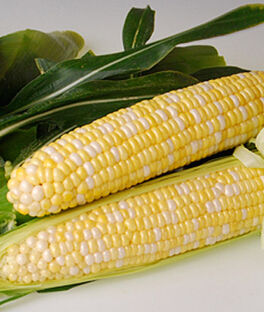 Corn, Sweetness Hybrid, , large