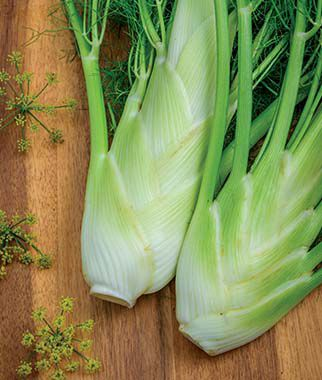 Fennel, Florence, , large