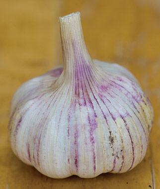 Garlic, Shilla 1/2 lb Garlic, Garlic Sets, Garlic Plants, Garlic bulbs, Garden Supplies, Vegetable Garden