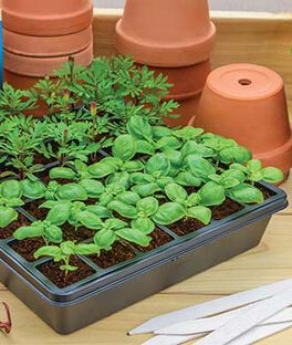 Choose Below From Our Seed Starting Trays And Kits The