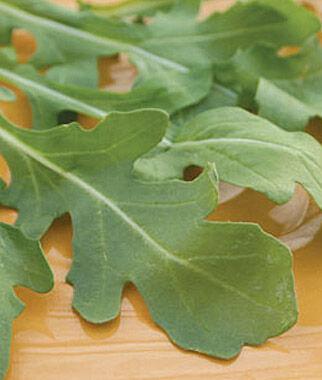 """Arugula, Myway 1 Pkt. (500 seeds) Arugula Seed, Rocket Seed, Arugula """"Rocket"""", Arugula, Garden Seed, Vegetable Seed, Seed, Garden"""