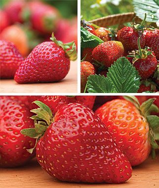 Strawberry, All Season Collection, , large