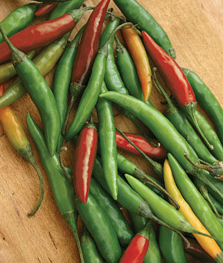 Pepper, Hot, Thai Hot, , large