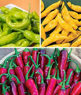 Hot Peppers Collection, , large