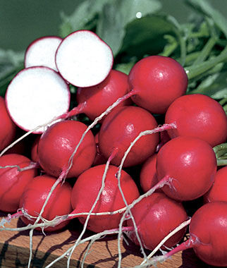 Radish, German Giant Organic, , large