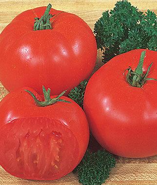 Tomato,Super Beefsteak 1 Pkt. (175 seeds), Tomatoes, Tomato Seeds, Beefsteak Tomatoes, Slicing Tomatoes, Tomato Starts, Tomato Plants