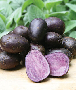 Potato, Purple Majesty, , large