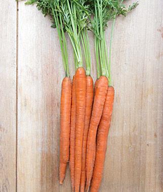Carrot, Mokum Hybrid 1 Pkt. (1000 seeds), Carrot, Carrot Seeds, Carrot Seed, Seeds, Vegetable Seeds, Vegetable Garden Supplies, Garden Seeds