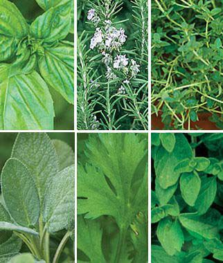 Fresh Herb Plants Collection, , large