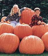 Pumpkin, Atlantic Giant, , large