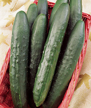 Cucumber, Sweeter Yet Hybrid, , large