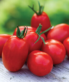 Tomato, Mighty Sweet Hybrid, , large