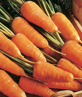 Carrot, Chantenay Red Cored Organic, , large
