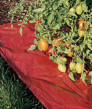 Reflective Red Mulch Film Tomato Plant Gardening