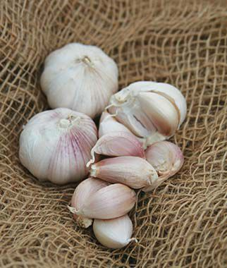 Garlic, Inchelium Red, , large