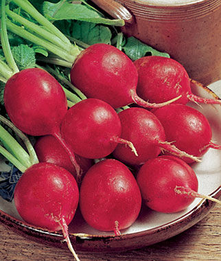 Radish, Crimson Giant, , large