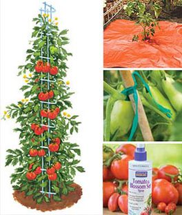 Ultimate Tomato Growers Kit, , large