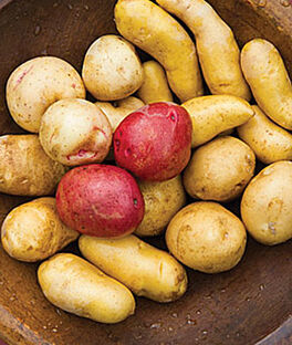 Gourmet Potato Collection, , large