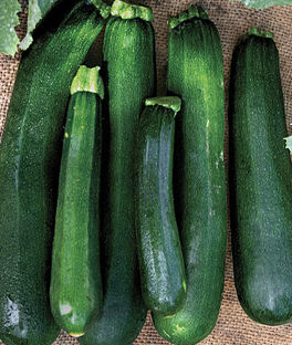 Squash, Zucchini Black Beauty Organic, , large