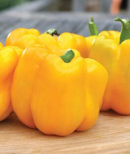Pepper, Sweet, Gold Standard Hybrid, , large