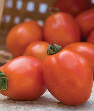Tomato, Principe Borghese 1 Pkt., Cherry Tomato Seeds, Currant Tomato Seeds, Grape Tomato Seeds, Cherry Tomato, Tomato Seeds