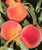 Peach Tree, Sweet 'N Up, , large