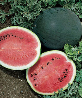 Watermelon, Bush Sugar Baby, , large