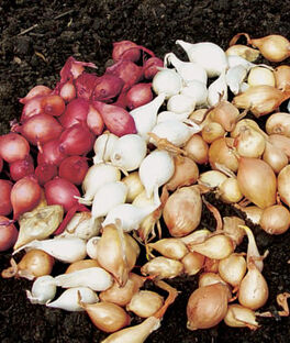 Onion Collection, Sets, , large