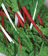 Swiss Chard, Red & White Mix Organic, , large