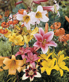 Lily, All Summer Mix, , large