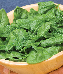 Spinach, Bloomsdale Organic, , large