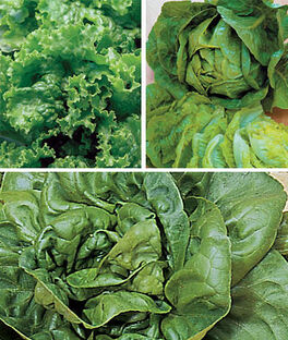 Lettuce, Summer-Long Collection, , large