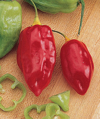 Pepper, Hot, Caribbean Red , , large