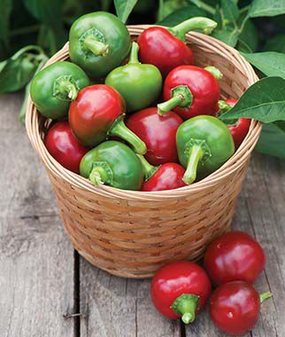 Pepper, Hot, Large Cherry, , large