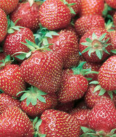 Strawberry, AC Wendy, , large
