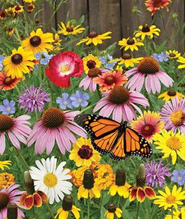 Wildflowers, Pollinator Mix, , large